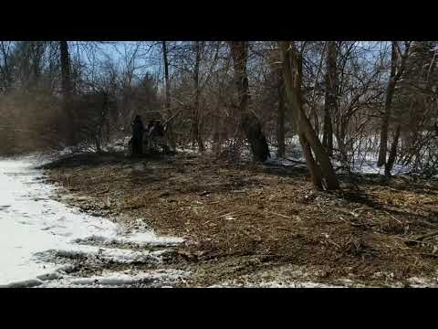 Back Yard Brush Clearing and Yard Expansion in Indianapolis!
