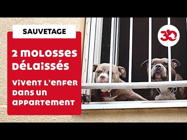 Deux chiens abandonnés dans une pièce jonchée d'excréments