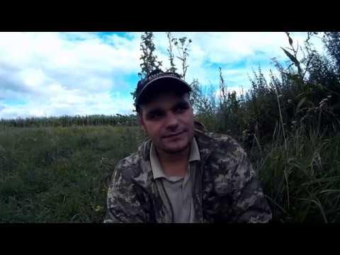 Что делать начинающему охотнику если не с кем пойти на охоту