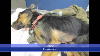 Rescuing an Abused Dog: Bringing Home Bruno