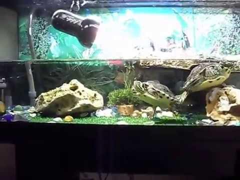 Allestimento tartarughiera youtube for Acquario tartarughiera