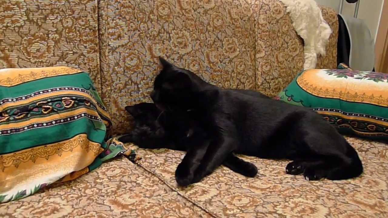 Čierna mačička striekať všade