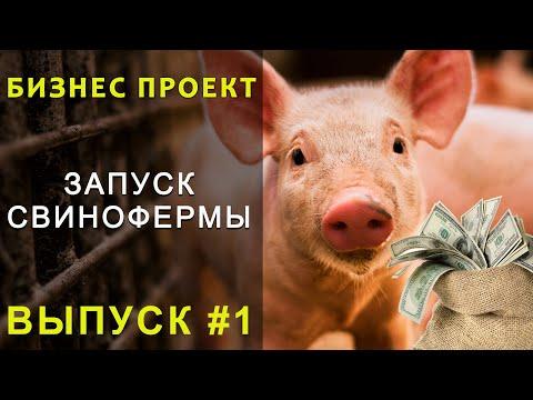 Свиноферма в домашних условиях