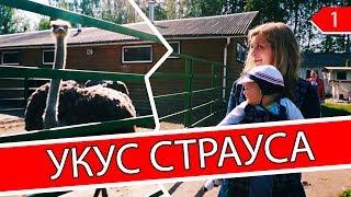 Укусил страус на ферме «Страусиный хутор» в СПб.