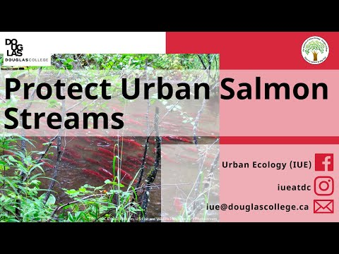 How To: Protect Urban Salmon Streams