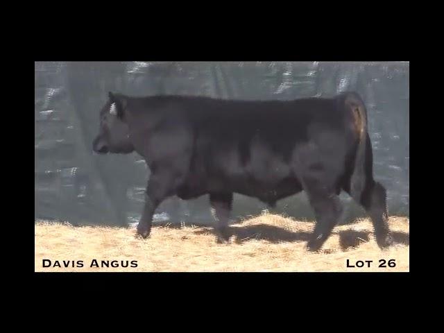 Davis Angus Lot 26