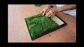 Flat Moss Installation