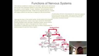 Bio Human body Project  Circulatory-Nervous Project