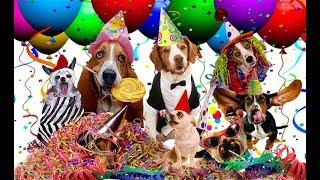#128.Собачий костюмированный парад- пари.Америка(Нью Йорк)