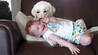 Прикол!Что делает собака девочке?(Как заработать на Ютуб школа Дмитрия Комарова.Жми ссылку! http://www.school-komarov.com/wppage/pervaya/, 2013-08-09T02:35:25.000Z)