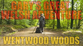 Wentwood Woods | Woodland Photography | Gary's Great Welsh Adventure