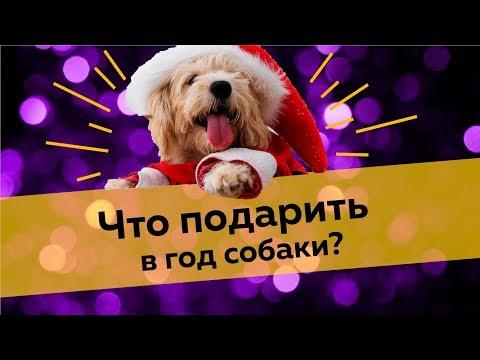 Видео Что подарить собачнику