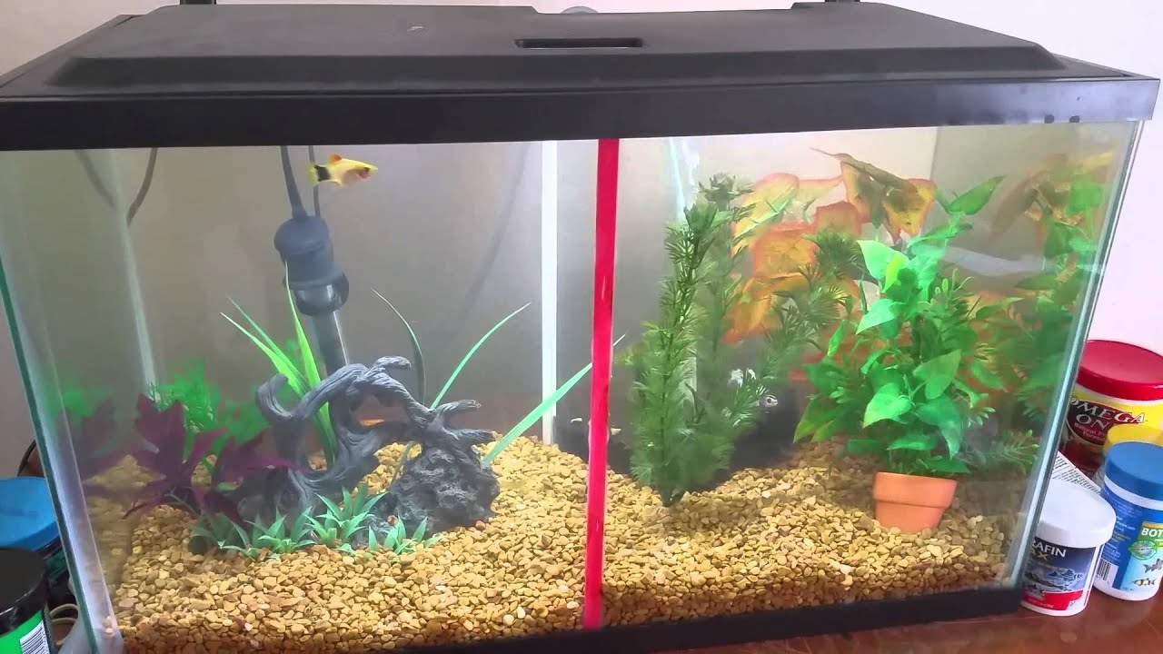 Tetra 10 gallon betta community tank youtube for 10 gallon fish tanks
