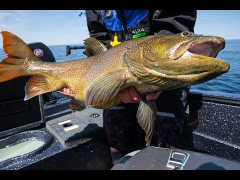 Catching The Most Incredible Fish We Have Ever Seen! Offshore Fishing On Lake Superior.