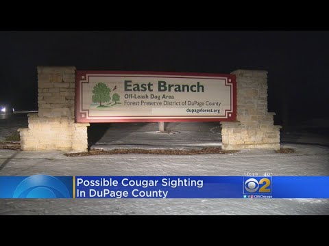 Cougar Sighting Reported In DuPage County