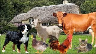 витамины животных инструкция