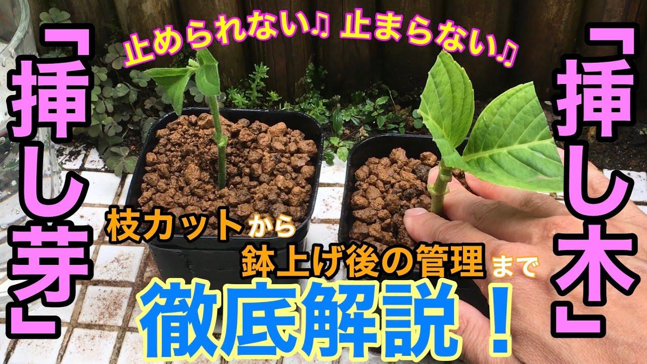 【植物の増やし方】「挿し木・挿し芽」を徹底解説 / 時期・方法・置き場所・水遣り / これまでの成功例も一挙ご紹介【ガーデニング】