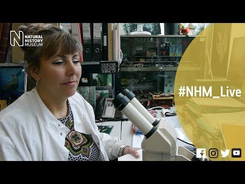 Meet the spiders with Jan Beccaloni | #NHM_Live