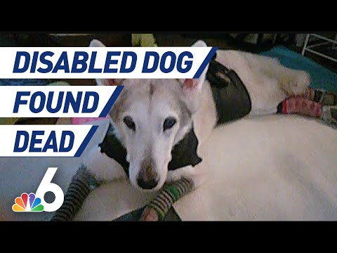 Disabled Dog Found