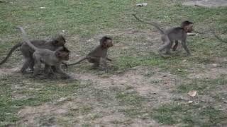 monkey fighting for fun /akmonkeyzone/