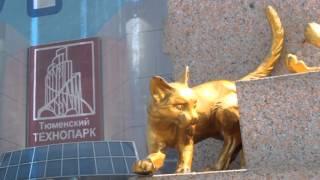 Самые дикие кошки в Тюмени!- Петр Малюгин
