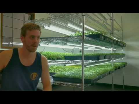 The Truth About Growing Microgreens For Profit Youtube