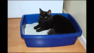 как часто менять лоток кошке
