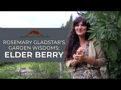 Rosemary Gladstars Garden Wisdoms - Elderberry Medicine