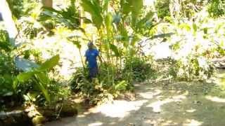 Jamaica 2013 pt 2 - Coyaba Gardens
