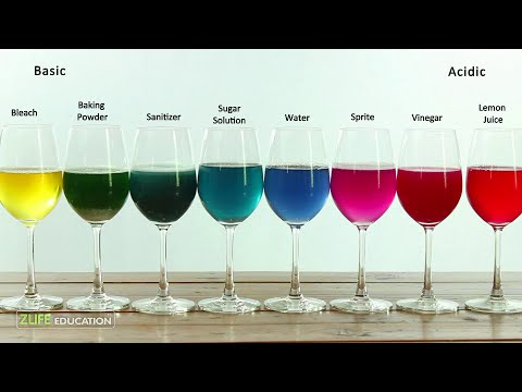 Red Cabbage Indicator Colors Chemistry Experiment For Kids To Do