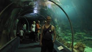 Адлер-Сочи. Океанариум. Самый большой в России.(Читайте полный обзор со всеми ценами. http://theobzorr.blogspot.ru/2015/03/..., 2016-03-20T10:53:01.000Z)