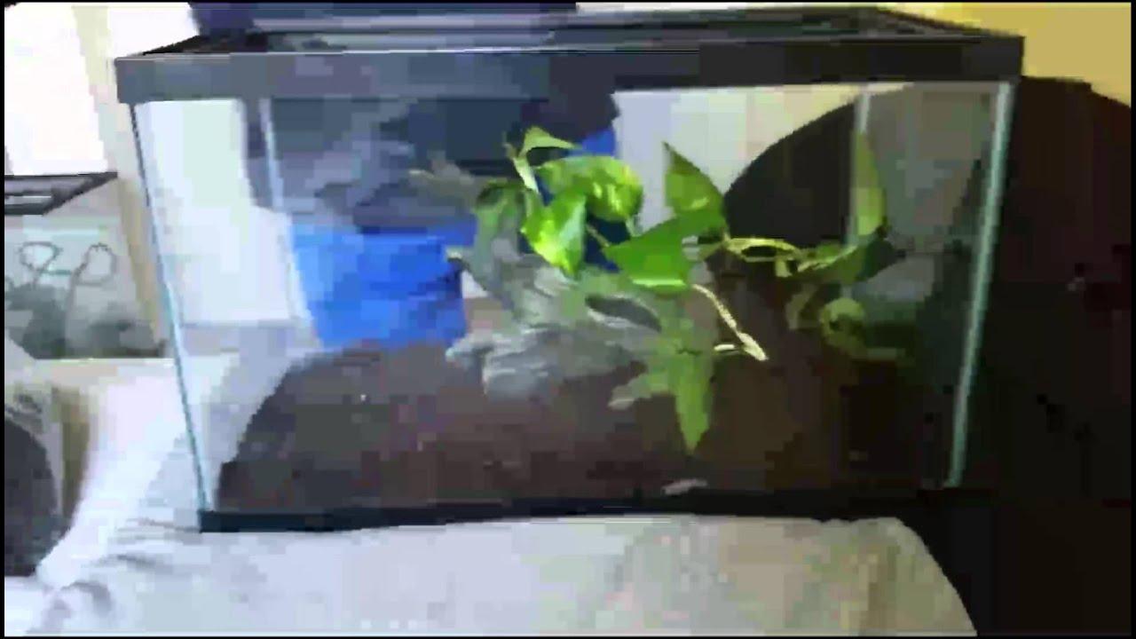 How To Setup Pacman Frog Tank Youtube