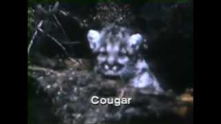 Hinterland Who's Who: Cougar TV spot