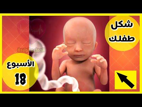 شكل الجنين في الاسبوع 18 من الحمل Youtube
