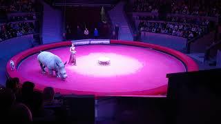 """Носорог на премьере """"Жираф-шоу"""" в Новосибирске"""