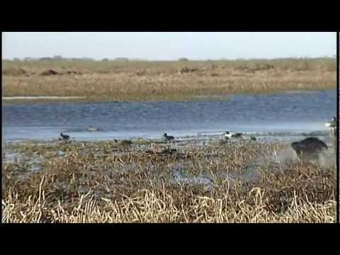 Duck hunting in Argentina by Sunrise Productions