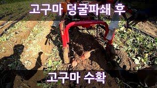 고구마 수확기 작업 영상