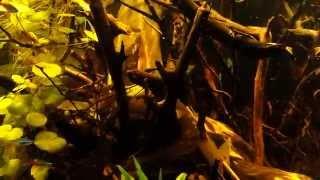 Akwarium biotop amazonka 360l / 2