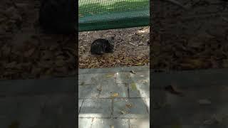Милые коты мяукают, гуляют. Funny Cats Meow Walk. Kucing Lucu. Lustige Katzen. Gatos Graciosos. 面白い猫