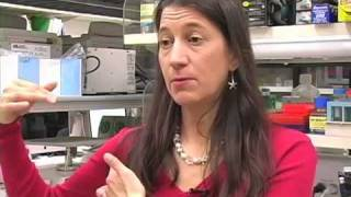 No Longer Germ Warfare - An Interview with Dr. Julie Segre