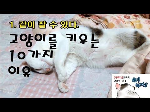 [나루TV]고양이를 키워야하는 10지 이유( 10 Reas