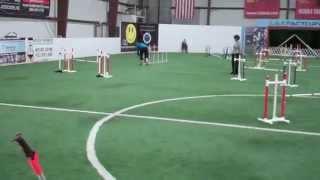 Baker's Runs - Capital Dog Training Club Agility Trial 2015