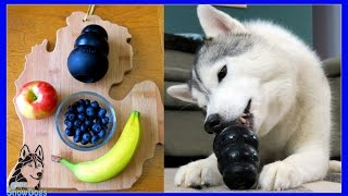 DIY DOG TREATS FROZEN FRUIT SALAD KONGS | Snow Dogs Snacks 48