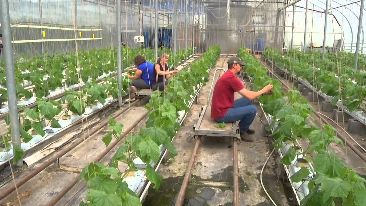 Shirleyu0027s Greenhouses