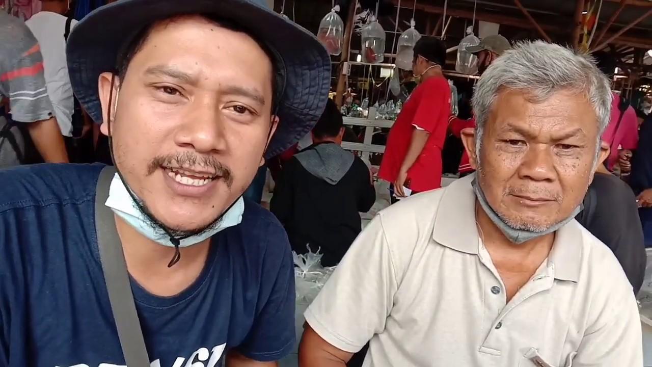Sosialisasi jadwal pasar ikan hias Parung Bogor || langsung dengan pemilik pasar