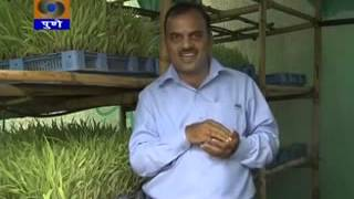 Hydroponic fodder Govind Dairy Success story of low cost unit by  broadcasted DDK Pune