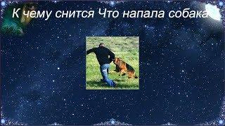 К чему снится Что напала собака (Сонник)