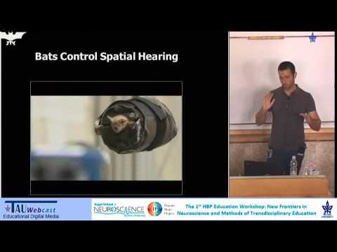 From Bat Behavior to Robot Cognition