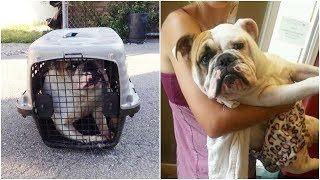 Sweet heart bull dog faces a long way to recovery she is willing to live Mp3