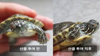 거북이 키우기 눈병에 걸린 거북이 어떡하나요